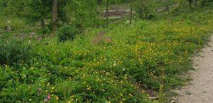 Wild flowers in The Warren